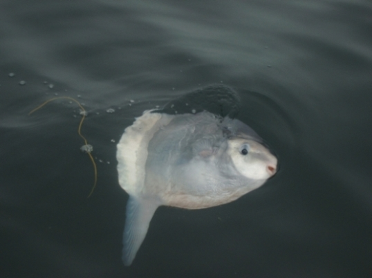 Sunfish alongside for a look at us
