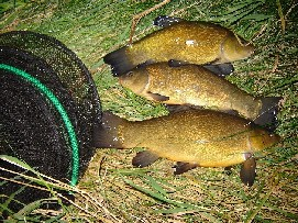 red circle tench