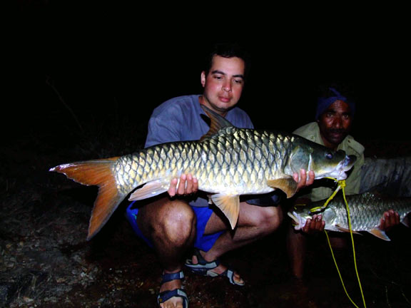 Another Couple of Gold Mahseer.