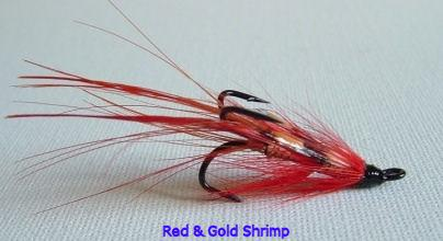 Red and Gold shrimp.JPG