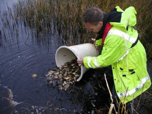 Fish from our Calverton fish farm find a new home
