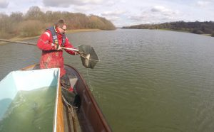 Releasing the first of the new fish into Bewl Water