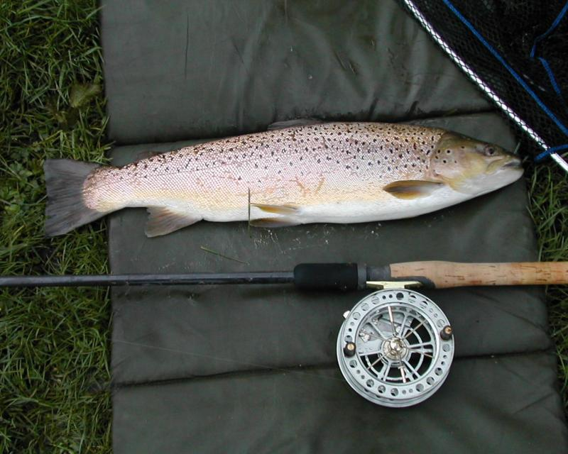 Timsbury Trout