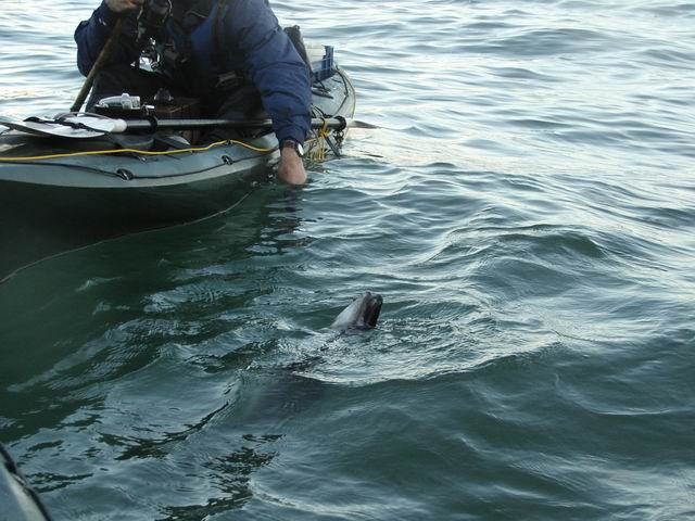 conger from a kayak!!
