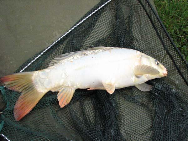 fishing 001 (7)_1.jpg