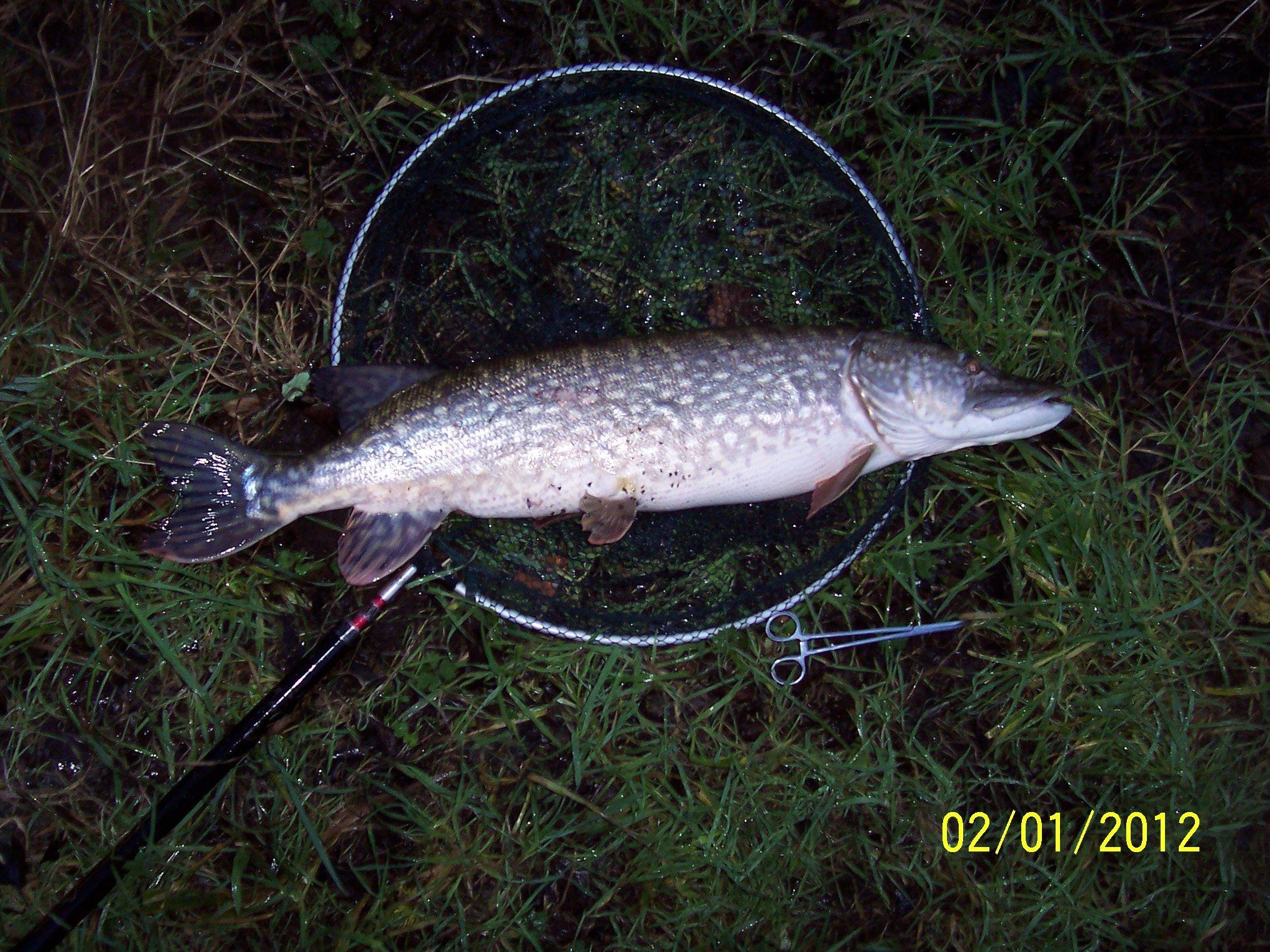2 January 2012 (A big fat Pike!)