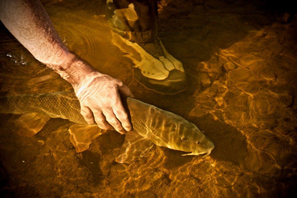Barbel-Hot-weather-fishing-1024x682.jpg